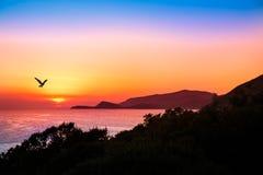 Schwebender Raubvogel mit einem schönen Sonnenuntergang über dem Ozean Lizenzfreie Stockbilder