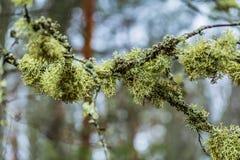 Schweden - 1. April 2017: Niederlassungen in einem Wald in Schweden Lizenzfreie Stockfotos