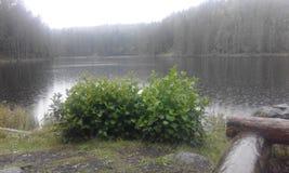 Schweden-Naturwasser-Waldsommer Stockbilder