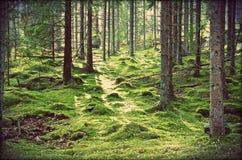 Schwedische magische Wälder lizenzfreie stockbilder