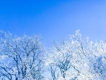Schwedische Natur in der Winterzeit Stockbild