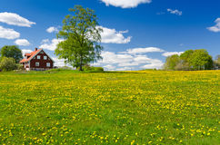 Schwedischer Bauernhof im Mai Stockfoto