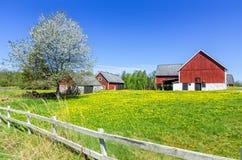 Schwedischer Frühlingsbauernhof mit traditionellem Zaun Lizenzfreie Stockbilder