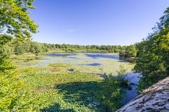 Schwedischer Seeblick des Sommers vom Hügel Lizenzfreie Stockfotografie