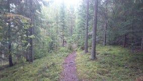 Schwedischer Wald Lizenzfreie Stockfotos