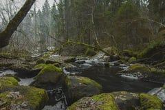Schwedischer Wald Crystal Clear Water In Thes lizenzfreies stockbild