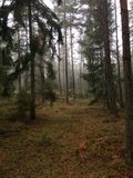 Schwedischer Wald im Vorfrühling stockfotografie