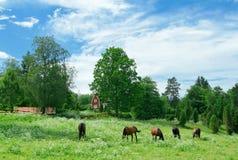 Schwedisches contryside Stockfotografie