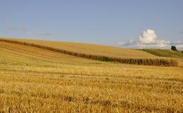 Schwedisches landwirtschaftliches Ackerland lizenzfreie stockfotos