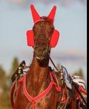 Schwedisches Pferd Lizenzfreies Stockfoto