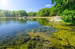 Schwedisches Seeufer mitten in Sommer Stockbild
