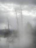 Schwefliger Nebel, der tote Bäume in Yellowstone einschlägt Stockfotografie