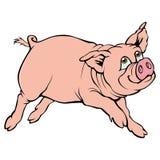 Schwein Stockbilder