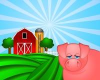 Schwein auf grüner Weide mit rotem Stall mit Korn-Silo Stockbild