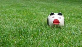 Schwein auf trhe Gras Stockfotos