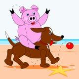 Schwein, das auf einem Hund sitzt Stockbild