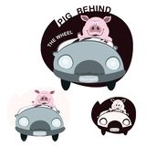 Schwein, das Auto antreibt Stockbilder