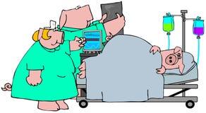 Schwein-Grippe Stockfotos