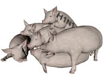 Schwein-Grippe. Lizenzfreies Stockbild