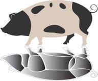 Schwein mit Reflexion Stockfoto