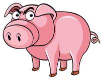 Schwein mit verärgertem Gesicht Stockfoto