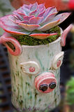 Schwein-Pflanzer - Echevaria-Nachglut-Betriebsanordnung Stockbilder