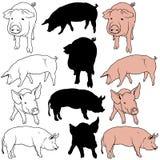 Schwein-Set Lizenzfreies Stockfoto