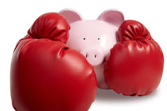 Schwein und Boxhandschuh Stockfotografie