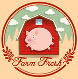 Schwein und rote Scheune auf Logo Stockbilder