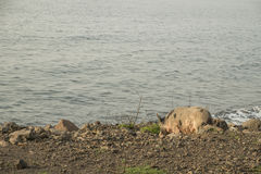 Schwein, zum durch das Meer zu gehen Lizenzfreies Stockfoto