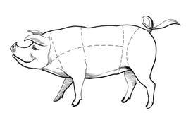 Schweindiagramm vektor abbildung