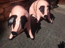 Schweine auf königlicher Meile Edinburgh Stockbilder