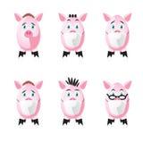 Schweine in der SchutzGesichtsmaske Stockbilder