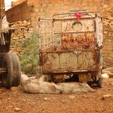 Schweine, die in einer Straße schlafen Lizenzfreie Stockfotos