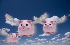Schweine fliegen Stockfotos