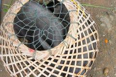 Schweine im runden Bambuskorb Stockfotografie