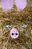 Schweine vom Stroh Lizenzfreies Stockfoto