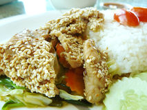 Schweinefleisch gebratene koreanische Soße und thailändischer Reis Lizenzfreie Stockfotos