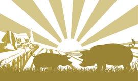 Schweinezuchtbetriebszene Lizenzfreies Stockfoto