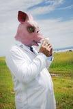 Schweingrippe Stockfotos