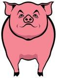 Schweinillustration Lizenzfreie Stockbilder