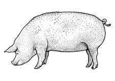 Schweinillustration, Zeichnung, Stich, Tinte, Linie Kunst, Vektor Stockbilder