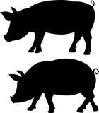 Schweinschattenbild - schwarze Vektorillustration Stockfotografie