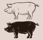 Schweinvektorlogo Bauernhof, Schweinefleisch, piggy Ikone Lizenzfreie Stockbilder