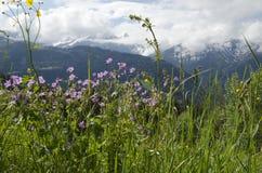 Schweiz Fotografia Stock Libera da Diritti