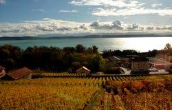 Schweiz: Sjön Neuchatel omges av vingårdar arkivfoton