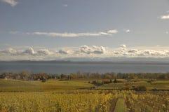 Schweiz: Vit-wynedruvakolonier på sjön Neuchatel royaltyfri bild