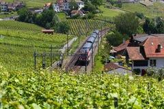 Schweizare utbildar bortgång till och med de Lavaux vingårdarna på sjöGenève, Schweiz arkivfoto