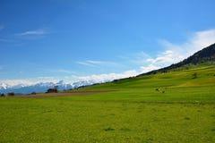 Schweizarelandskapbygd under våren Arkivfoto