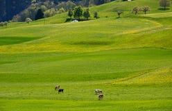 Schweizarelandskapbygd under vårsäsong Fotografering för Bildbyråer